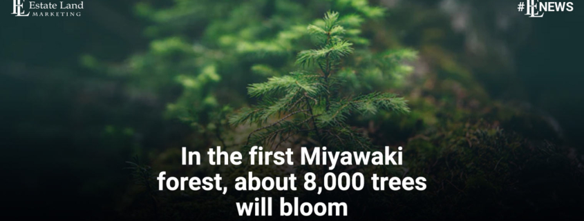 In the first Miyawaki forest, about 8,000 trees will bloom