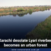 Karachi desolate Lyari riverbed becomes an urban forest